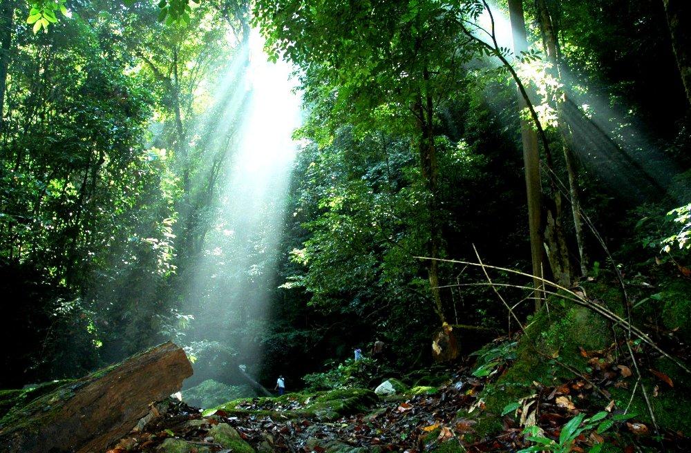 <!--:id-->Memasyarakatkan Biogas Sebagai Energi Alternatif<!--:-->