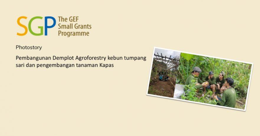 Pembangunan Demplot Agroforestry kebun tumpang sari dan pengembangan tanaman Kapas